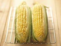 Twee maïskolven van graan Royalty-vrije Stock Afbeelding