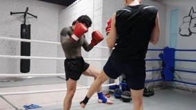 Twee ma bokser het opleidingsbeen schopt terwijl het in dozen doen in strijdring Atletenmens die lage slagen opleiden door voet t stock videobeelden