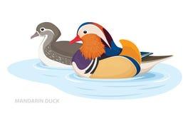 Twee Mandarin Eenden zwemmen in het water Aziatische Vogels Mannetje en Wijfje Vector vector illustratie