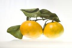 Twee Mandarins met groene die bladeren, mandarijncitrusvruchten op witte achtergrond worden geïsoleerd stock afbeeldingen