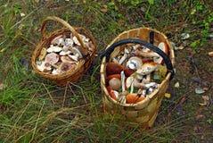 Twee manden van verschillende paddestoelen Stock Foto