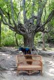 Twee mannetjes, pauwpauwen die op een rieten bank op de achtergrond van een pluizige oude boom in het park zitten stock foto's