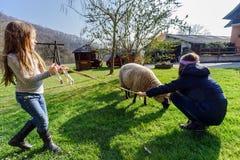 Twee meisjes die met landbouwbedrijfschapen lopen stock afbeeldingen