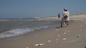 Twee meisjes die op strand met papa en hond lopen Het gelukkige Lopen van de Familie stock videobeelden