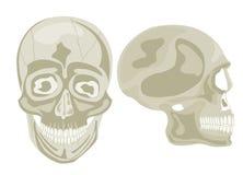 Twee menselijke schedels Stock Afbeelding