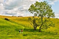 Twee mensen die door een gouden weide lopen. Stock Afbeeldingen