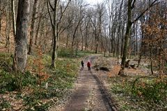 Twee mensen die in het bos op wandelingssleep lopen Gang in hout Royalty-vrije Stock Afbeelding