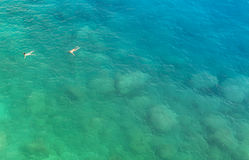 Twee mensen die in het mooie blauwgroene overzees zwemmen bekijken van ab Stock Fotografie