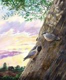 Twee mezen in een boom Royalty-vrije Stock Afbeeldingen
