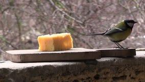 Twee mezen eten kaas stock video