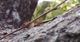 Twee mieren het communiceren royalty-vrije stock afbeeldingen