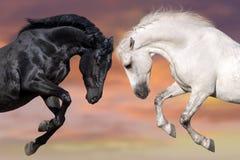 Twee mooi paardportret Stock Fotografie