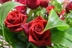 Twee mooi rood bloemen en gebladerte van het rozenboeket Stock Foto's