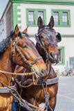 Twee mooie paarden op de huisachtergrond Weimar, Duitsland Royalty-vrije Stock Afbeeldingen