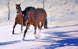 Twee mooie paarden op sneeuwgebied stock afbeeldingen