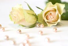 Twee mooie rozen Royalty-vrije Stock Afbeeldingen