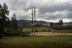 Twee naakte bomen, hoog in een zwarte wolk op een weide Stock Fotografie