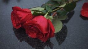Twee natte rozen op een steen stock videobeelden