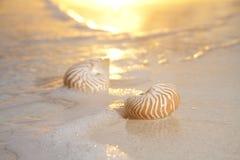 Twee nautilusshells in het overzees, zonsopgang Stock Foto