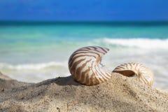 Twee nautilusshells op strand Stock Afbeeldingen