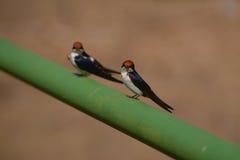 Twee nieuwsgierige vogels Royalty-vrije Stock Afbeelding