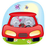 Twee Olifanten in een auto Royalty-vrije Stock Fotografie