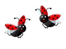 Twee onzelieveheersbeestjes Stock Afbeeldingen