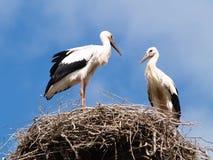 Twee ooievaars in het nest Royalty-vrije Stock Foto