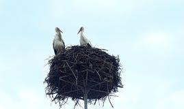 Twee ooievaars in het nest tegen de hemel royalty-vrije stock afbeelding