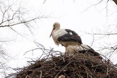 Twee ooievaars in hun nest wachten op beter weer royalty-vrije stock afbeelding