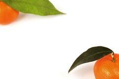 Twee oranje mandarijnen Stock Foto's