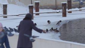 Twee oude vrouwen die tijd in het park doorbrengen die broodcrumbs werpen aan duiven stock footage