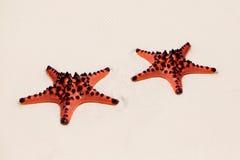 Twee overzees-sterren die op de achtergrond van het zandstrand liggen Royalty-vrije Stock Afbeelding