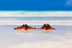 Twee overzees-sterren met trouwringen die op de achtergrond van het zandstrand liggen Royalty-vrije Stock Foto's