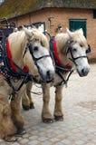 Twee paarden. stock fotografie