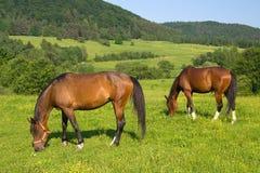 Twee paarden Royalty-vrije Stock Foto's