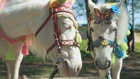 Twee paarden als geroepen poney Sluit omhoog stock footage