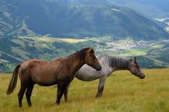 Twee paarden in bergen Stock Afbeeldingen