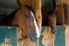 Twee paarden in de stal Royalty-vrije Stock Afbeeldingen
