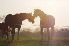 Twee paarden in de zon Stock Fotografie