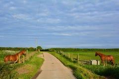 Twee paarden die elkaar, Norfolk, Baconsthorpe, het Verenigd Koninkrijk bekijken stock afbeelding
