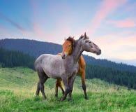 Twee paarden die onder roze ochtendhemel koesteren royalty-vrije stock afbeeldingen