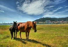 Twee paarden die in Viana do Castelo weiden Stock Foto's