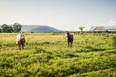 Twee paarden die zich in een weiland bevinden Royalty-vrije Stock Foto