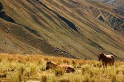 Twee paarden in het midden van gebieden royalty-vrije stock foto's