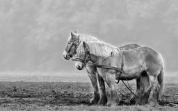 Twee paarden het wachten stock foto's