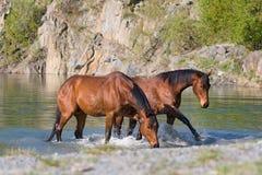 Twee paarden in het water Royalty-vrije Stock Afbeeldingen