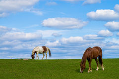 Twee paarden het weiden Royalty-vrije Stock Foto