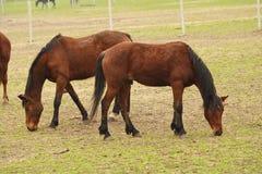 Twee paarden op de boerderij Stock Foto