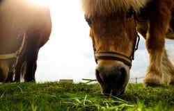 Twee Paarden op een gebied Stock Foto's